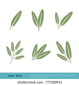 Sage Leaves Icon Vector Logo Template
