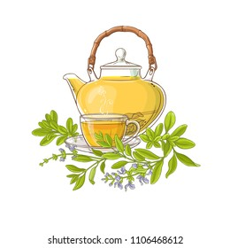 sage tea illustration