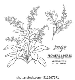 sage  vector set on white background