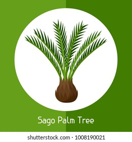 Sago palm tree. Illustration of exotic tropical plant.