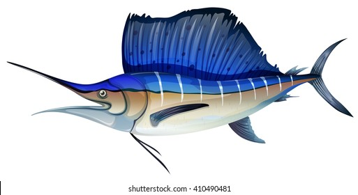 Sailfish marlin vector illustration
