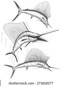 Sailfish sketches