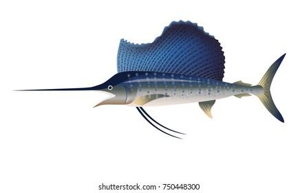 Sailfish. Vector illustration isolated on the white background