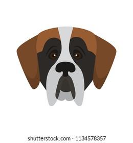Saint Bernard breed dog muzzle color vector icon