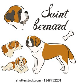 Saint bernard breed vector illustration set isolated. Doggy image in minimal style, flat icon. Simple emblem design for pet shop, zoo ads, label design animal food package element. Realistic dog sign