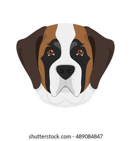 Saint Bernard dog isolated on white background vector illustration