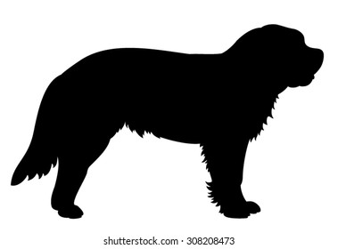 Saint Bernhard purebred dog standing in side view - vector silhouette isolated