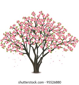 Sakura blossom - Japanese cherry tree, with falling petals isolated on white background