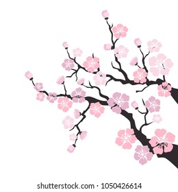 фотообои Sakura blossom on white background. Vector Illustration.