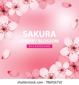 Sakura , cherry blossom background vector illustration