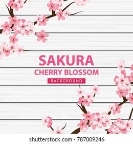 Sakura , cherry blossom on wood background vector illustration