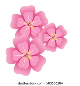 Sakura flower blossom on white background.Vector illustration.