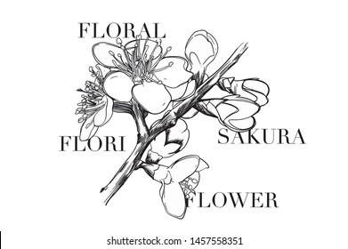 Sakura flower illustration with slogan design. For fashion and graphic design elements.