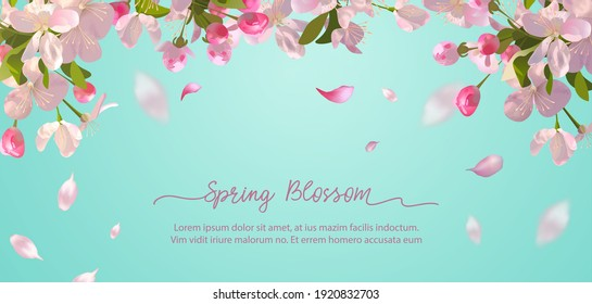 Sakura flowers and flying petals on spring background