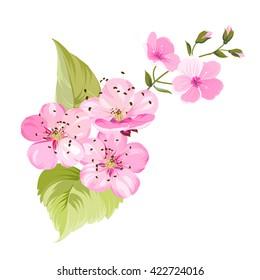 Sakura flowers. Spring background.