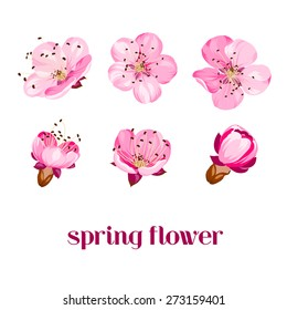 Sakura flowers. Spring background. Vector illustration.