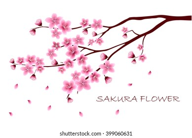Sakura flowers vector illustration.  invitation cards with a blossom sakura.  Branch of a blossoming cherry tree isolated on a white background.