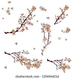 Sakura Japanese flower.cherry blossom or peach blossom vector for tattoo isolate on white background.