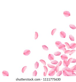 Sakura petals falling down. Romantic pink bright big flowers. Thick flying cherry petals. Scattered bottom right corner uncommon vector background. Love, affection, romance concept.