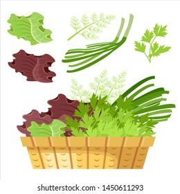 Salad greens in a basket. Vector illustration