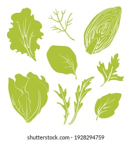 Salad leaves and herbs: lettuce, chicory, swiss chard, arugula, dill, parsley. Colorful line sketch collection of vegetables and herbs isolated on white background. Doodle hand drawn vegetable icons.