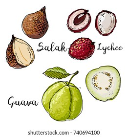 Salak, Lychee, Guava. Fruits drawn by a line on a white background. Fruits from Thailand. Food sketch lines.