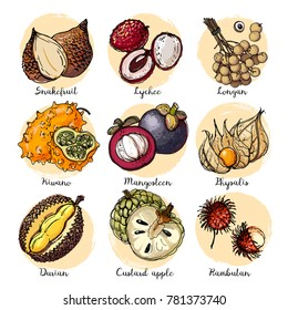 Salak, Lychee, longan, Kiwano, Mangosteen, Physalis, Rambutan, durian. Fruits drawn by a line on a white background. Fruits from Thailand. Food sketch lines.