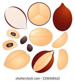 Salak vector illustration set. Whole, sliced and halved Salak graphics.