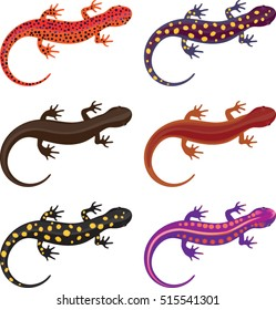 Salamander Clip Art Set - Vector Illustration