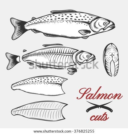 Diagram Of A Salmon Custom Wiring Diagram