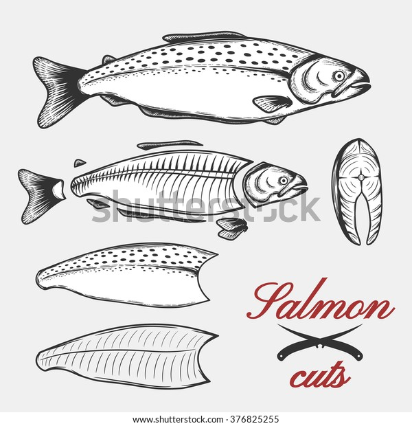 salmon cuts diagram: fillets, steaks and pan dressed