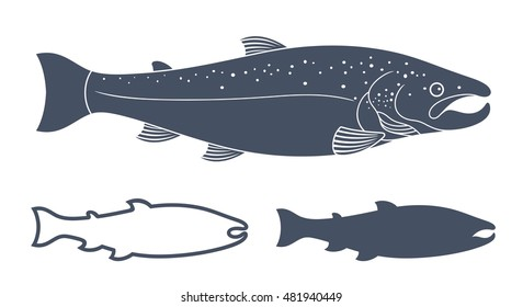 Salmon vector illustration. Isolated salmon on white background
