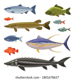 Saltwater and Freshwater Fishes Set, Fresh Aquatic Fish Species Cartoon Vector Illustration