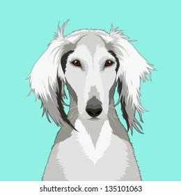 Saluki, The buddy dog