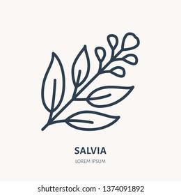 Salvia, sage flat line icon. Medicinal plant leaves vector illustration. Thin sign for herbal medicine, tree branch logo.