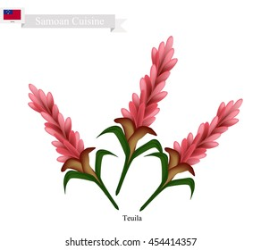 Samoa Flower, Illustration of Teuila, Alpinia Purpurata or Red Ginger Flower. The National Flower of Samoa.
