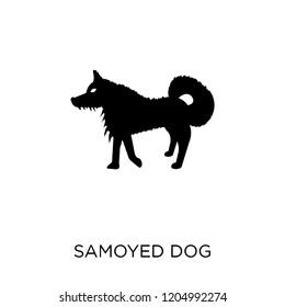 Samoyed dog icon. Samoyed dog symbol design from Dogs collection. Simple element vector illustration on white background.
