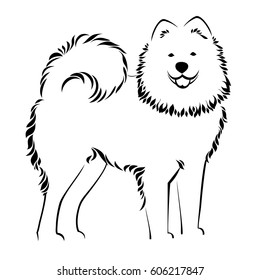 Samoyed dog isolated on white background. Vector Illustrated