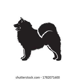 Samoyed dog - isolated vector illustration