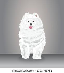Samoyed The Dog - Vector and Illustration