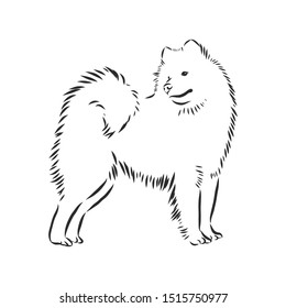 Samoyed husky, dog sketch, contour vector illustration