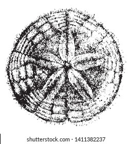 Sand dollar is the name given to a flattened looking sea urchin very common on sandy shores, vintage line drawing or engraving illustration.