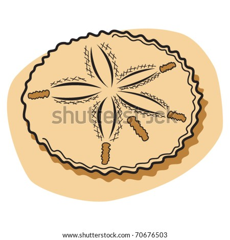 Sand Dollar Sea Urchin Sitting On Stock Vector Royalty Free