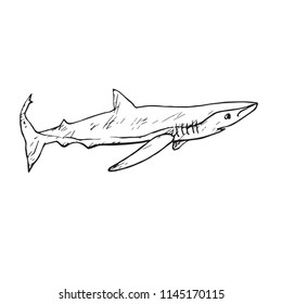 The sand tiger shark (Carcharias taurus), hand drawn doodle, sketch, vector outline illustration