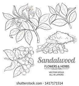 sandalwood vector set on white background