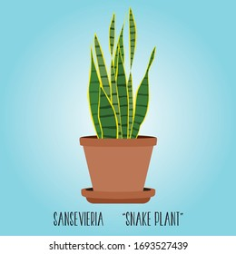 Sansevieria snake plant hand drawn vector