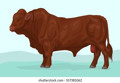 santa gertrudis bull breed