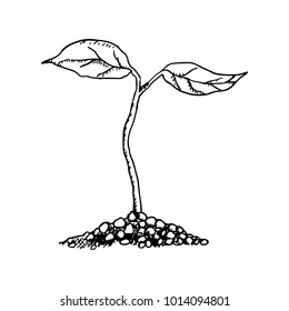 Sapling Hand Drawn Sketch Vector Black on White Background