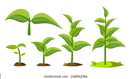 Saplings, Sprouts Growth Stages Vector Drawings Set. Green Saplings Growing In Soil Isolated Cliparts Pack. Seedling, Cultivation. Agriculture, Horticulture. Greenery, Gardening Flat Illustration