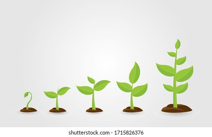 Saplings, Sprouts Growth Stages Vector Drawings Set. Green Saplings Growing In Soil Isolated Cliparts Pack.